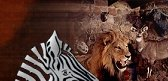 taxidermy wildlife trophies wildlife trophy collectors south africa